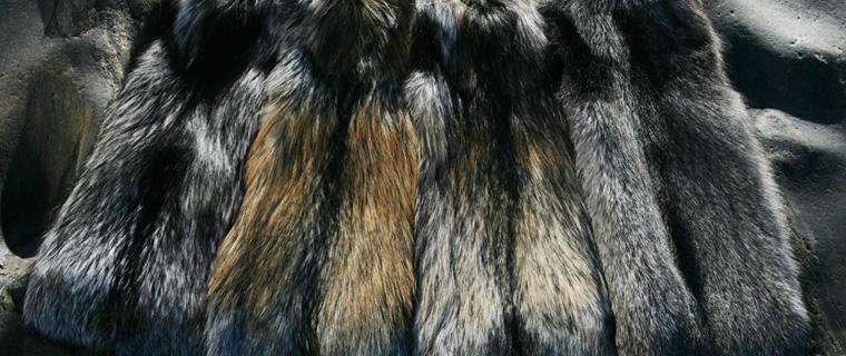 Palette de couleurs de Finnraccoon chez Saga Furs