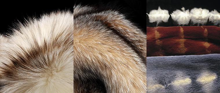coloration fourrure