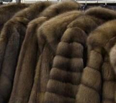 Manteaux de fourrure de zibeline