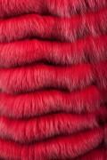 Gilet de Renard Teinté Rouge à Capuche Sans Manche